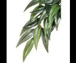 Растение Хаген Рт-3031 Пласт.Тропик Рускус 35*20см Малое для Террариума