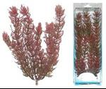 Растение Tetra (Тетра) Для Аквариума S Перистолистник Красный 606937