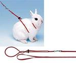 Шлейка с Поводком Для Кроликов Ferplast (Ферпласт) Hy Rab 120см Комплект