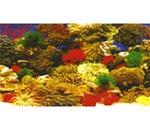 Фон Для Аквариума Triton (Тритон) Коралл 40см 1м 010040