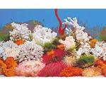 Фон Для Аквариума Triton (Тритон) Белый Коралл 40см 1м 040040