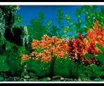 Фон Для Аквариума Triton (Тритон) Красная Бабочка 30см 1м 160030