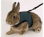 Поводок и Шлейка Для Кроликов Ferplast (Ферпласт) Jogging Xlarge Комплект