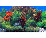 Фон Для Аквариума Triton (Тритон) Глубоководное Растение 40см 1м 080040