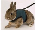Комплект Ferplast (Ферпласт) Jogging Large Поводок и Шлейка Для Кроликов