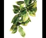 Растение Хаген Рт-3012 Пласт.Тропик 45*17см Мандарин Среднее для Террариума