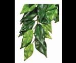 Растение Хаген Рт-3040 Пласт.Тропик Фикус 55*25см Среднее для Террариума