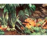 Фон Для Аквариума Triton (Тритон) Водная Трава и Камни 40см 1м 070040 100040