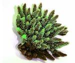 Коралл Для Аквариума Triton (Тритон) Зеленый Искусственный Силикон Sh-056G
