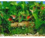 Фон Для Аквариума Triton (Тритон) Жемчужная Водная Трава 30см 1м 120030