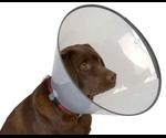 Воротник Buster 30см Для Кошек и Собак
